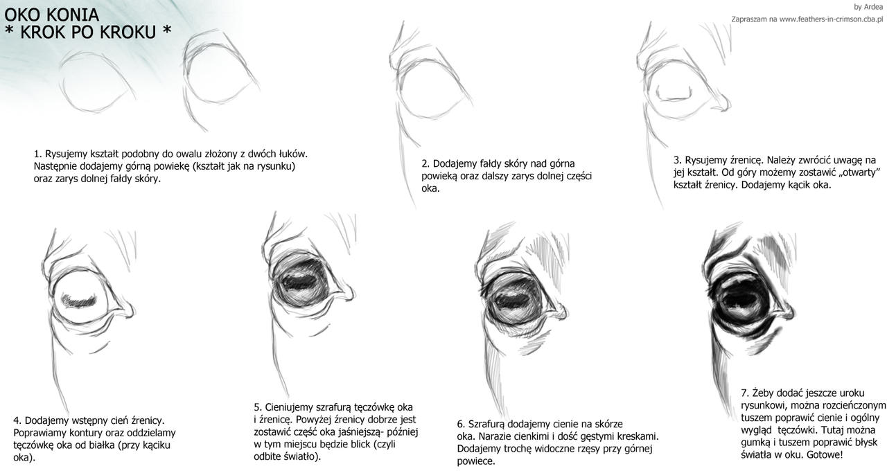 How To Draw A Horse Eye  Photo#8