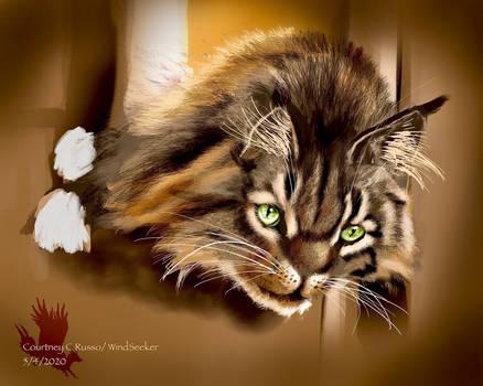 Ember in Cat Nirvana