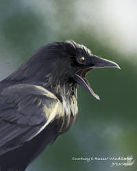 Raven Quickpsint