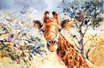 Wildlife Watercolor - Giraffe