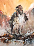 Watercolor Painting - Martial Eagle