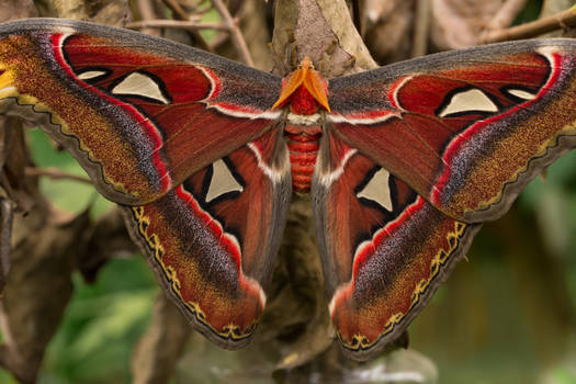 Big Colorful Butterfly