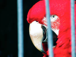 Close-Up Macaw by LalaManning