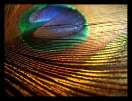 Piece of a Peacock Feather by Miaschen