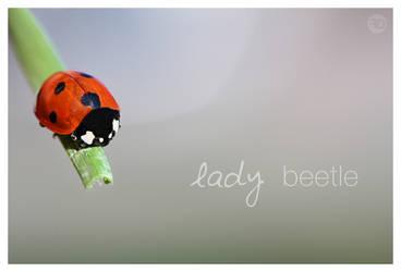 lady beetle by sp333d1
