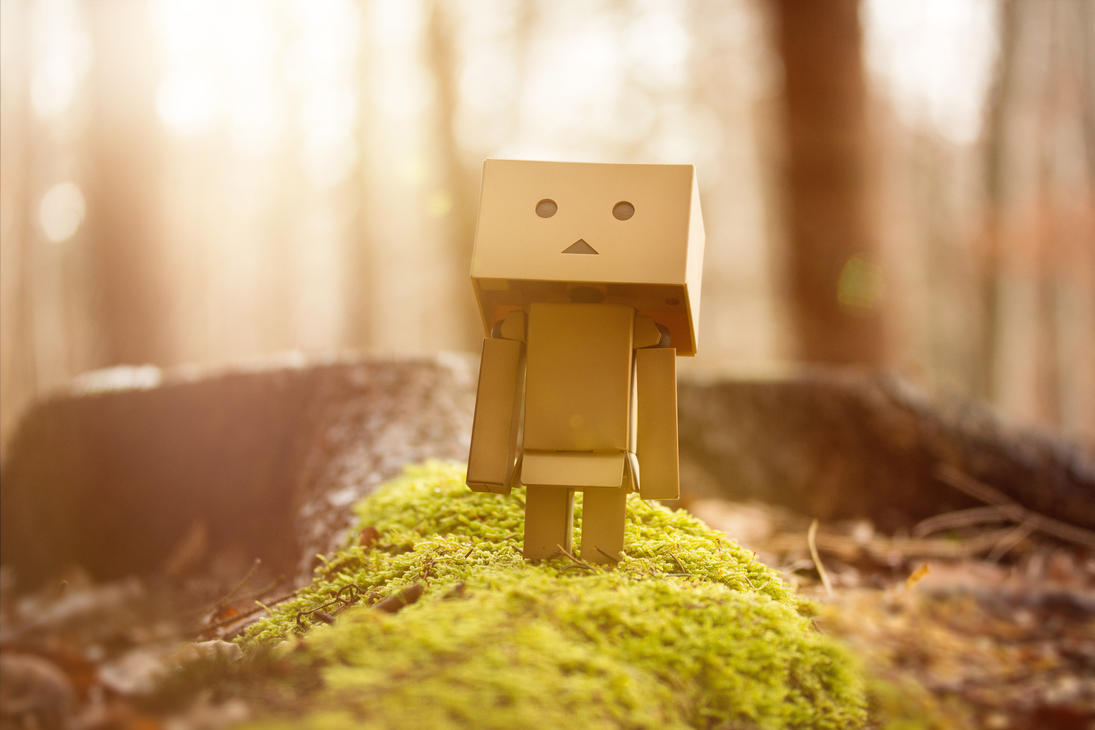 danbo in the forrest by sp333d1
