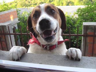 Smiley dog by devojkaizvode6