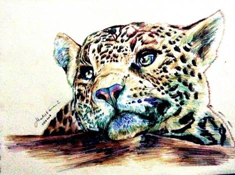 Wondering Leopard