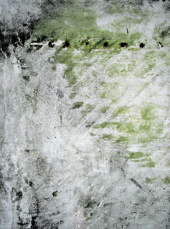 algae by ikhon