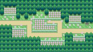 Pokemon BW3: Route 25