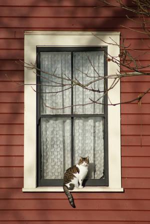 Glen Valley Window Cat by MrKaswa