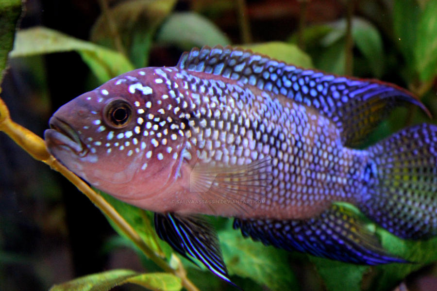 Pretty Fish Images