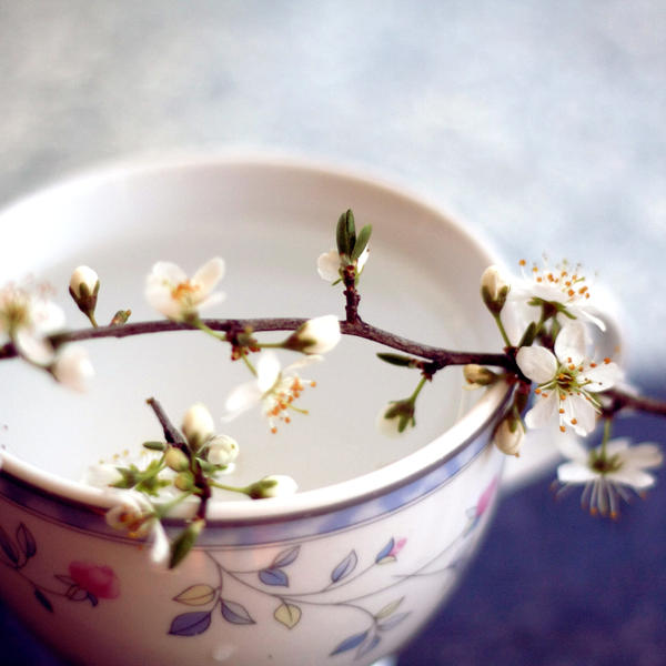 najromanticnija soljica za kafu...caj - Page 2 Plum_tea_II_by_extrasist0le
