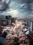 infrared - bukitGombak