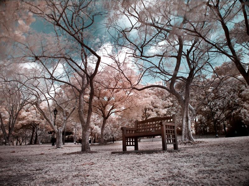 iNfraRed - bOtanical gardens 1 by shin-ex