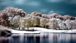 iNfraRed - bOtanical gardens 2