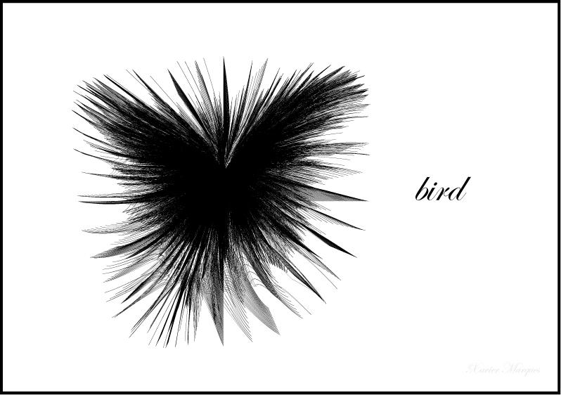 ...bird... by macakinho