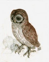 Albrecht Durer's Little Owl by ColorsOfTheWind28