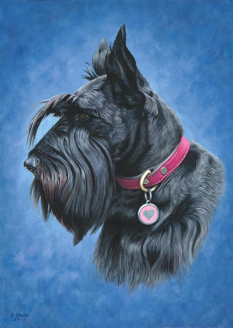 Scottish Terrier by NewAgeTraveller