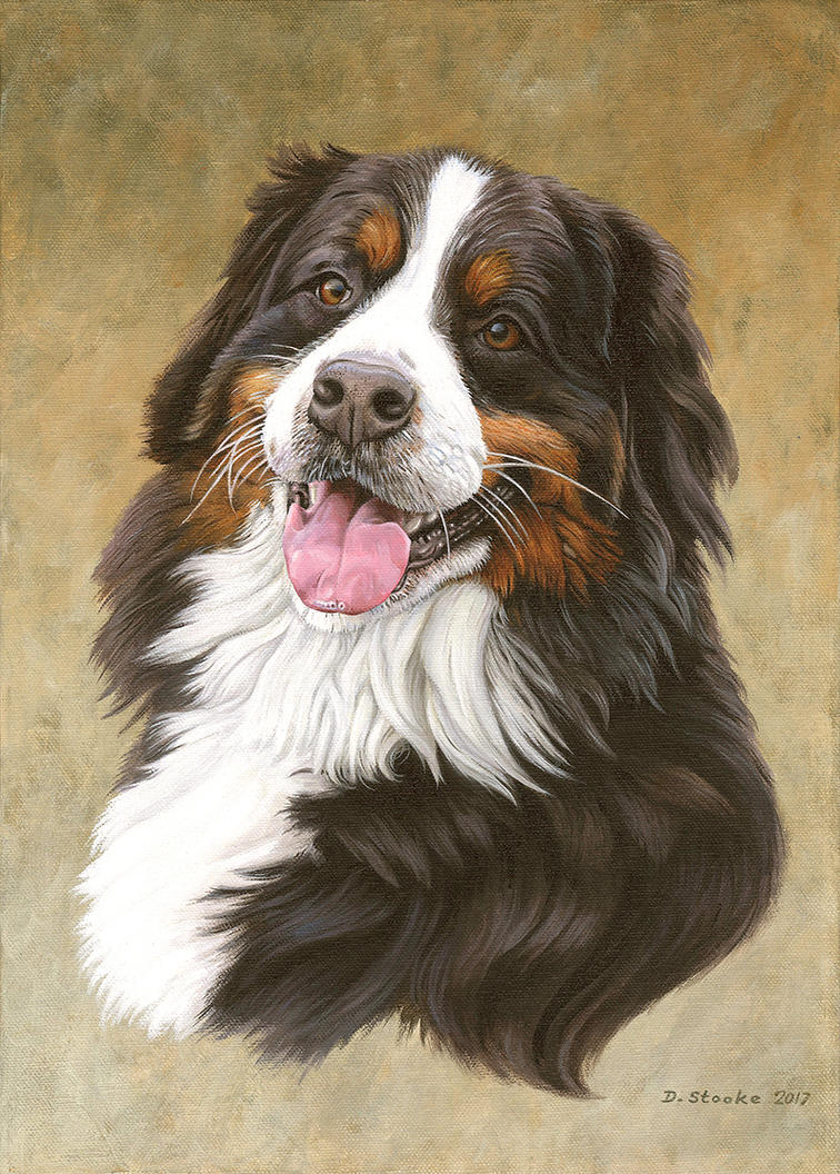 Bernese Mountain Dog by NewAgeTraveller