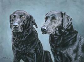 Double Dog Portrait by NewAgeTraveller
