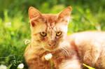 Mr.Cat by Amaimosha