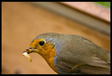 Robins Lunch by Boolean121