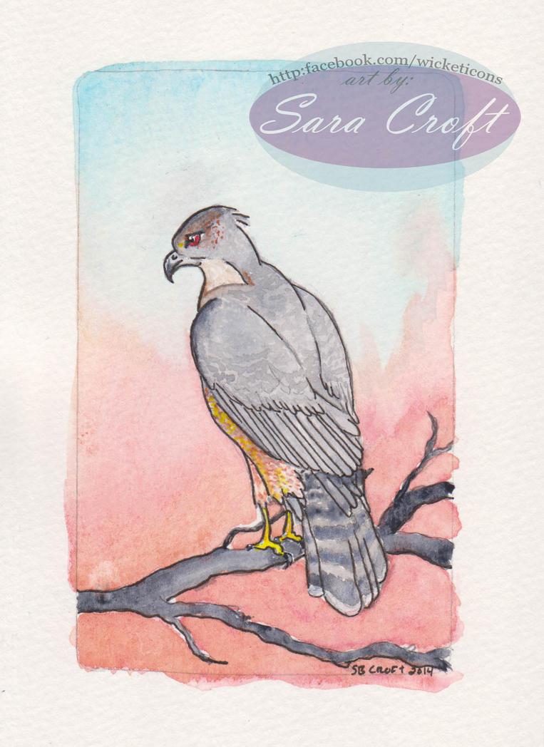 Cooper's Hawk by Neheti