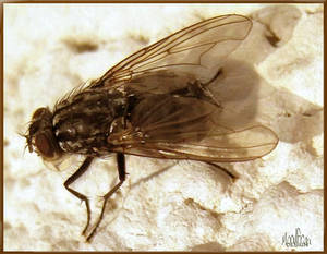 Fly on my Wall