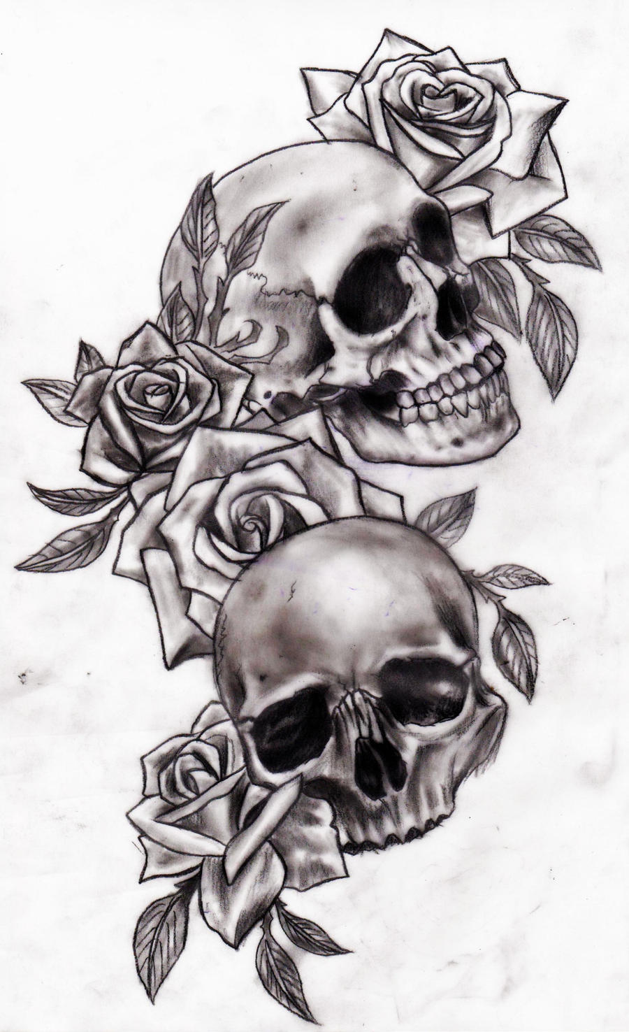 This is an image of Transformative Drawing Of Skulls And Roses