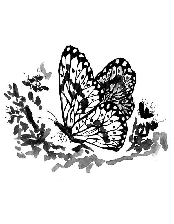 random butterfly by tkuat
