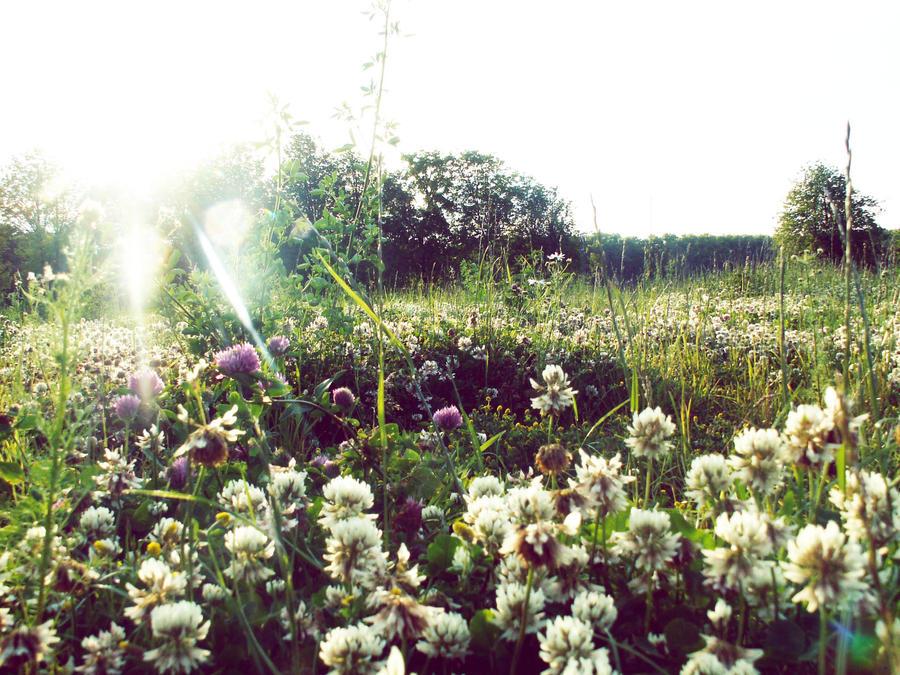 clover field by tkuat