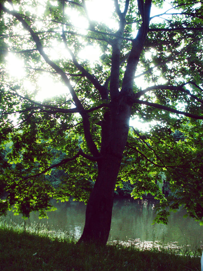 tree in the sun by tkuat