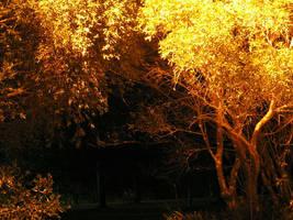 Archway of Light