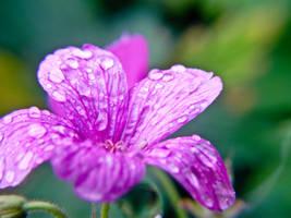 Pink Flower by Silverlight513