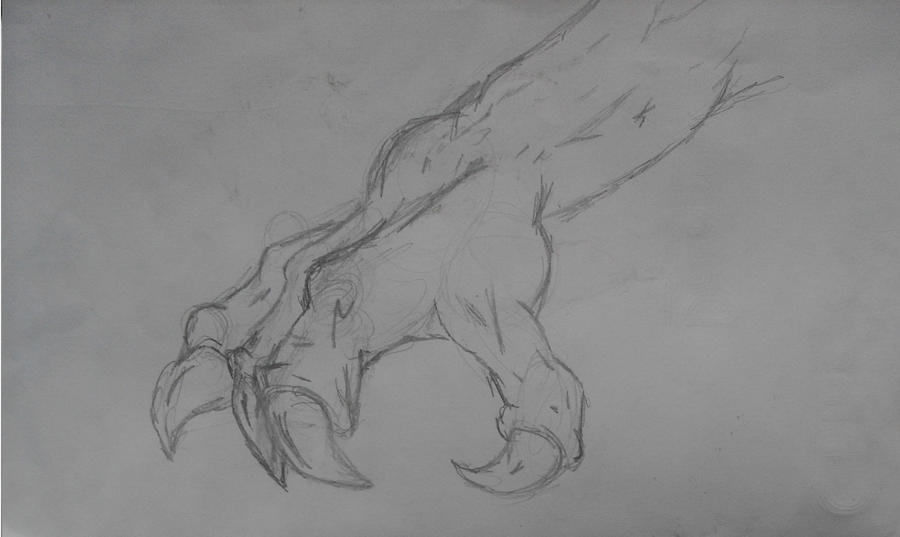 Line Art Dragon : Line drawing of dragon claw by panicmanic on deviantart