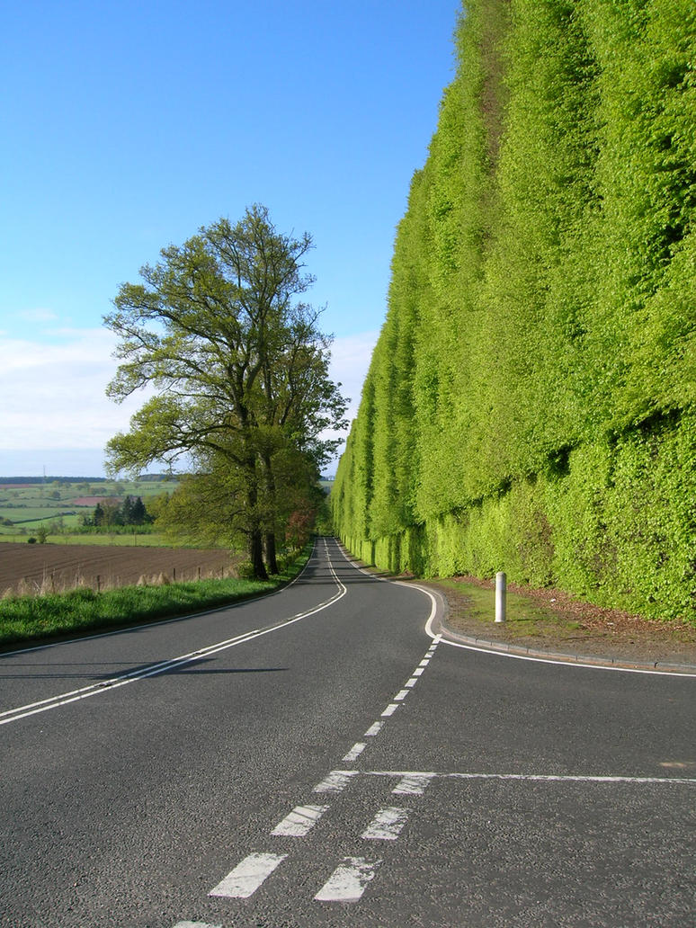 Meikleour Beech Hedges by Neuk