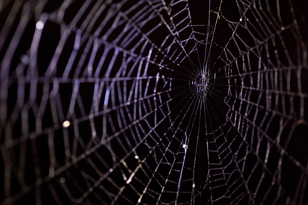 Spiderweb 2 by Neuk