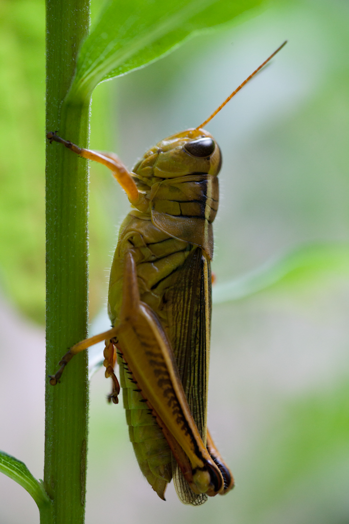Grasshopper 2 by Neuk