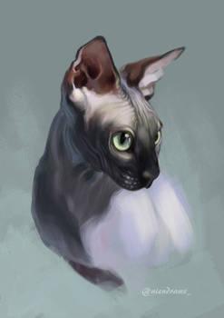 Sphynx cat study