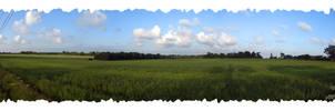 Green Field by Hieronimus-art