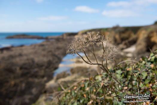 Basse mer en Bretagne