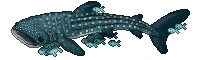 sharkwhale by AElOU