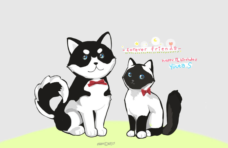 White black Cat and Dog by KPJ11 on DeviantArt