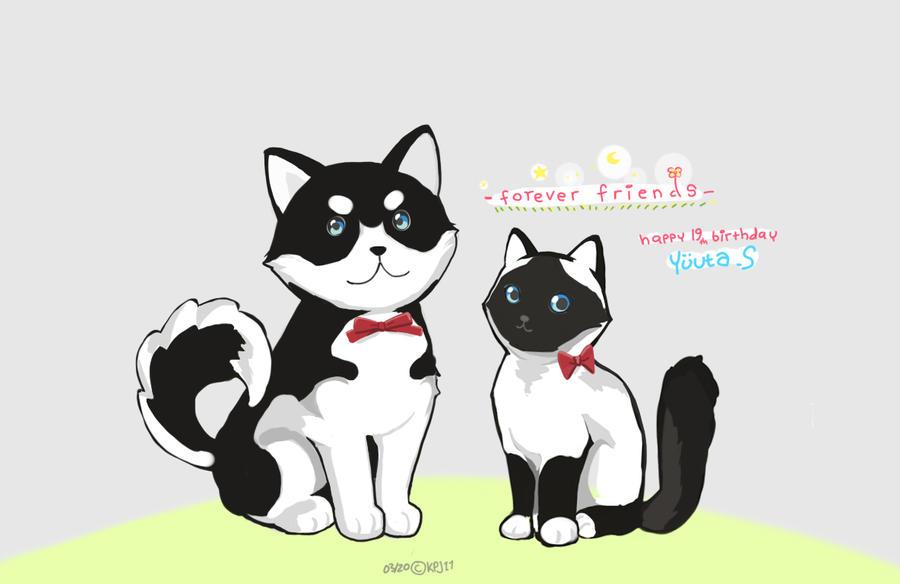 White black Cat and Dog by KPJ11 on DeviantArt