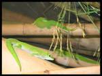 green crawlers
