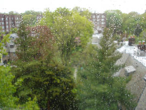 Rainy day view from my apartment window