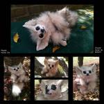 Playful Fennec Fox