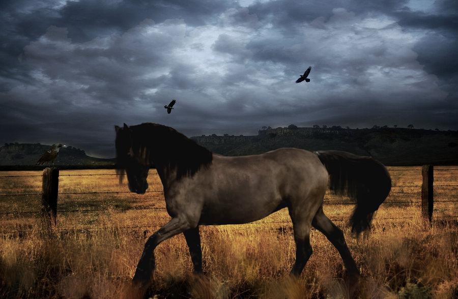 ^ Twilightstars ^ horses Acario_Manip_by_xX_Illusion_Xx