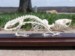 Articulated Rat Skeleton by TheMidasTouch